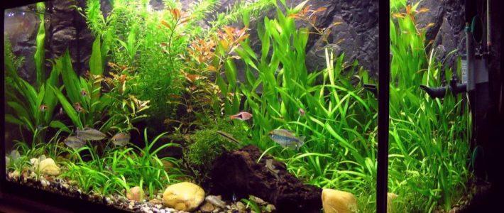 Aquarium im Endzustand