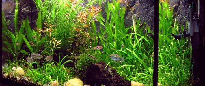 Stocking ideas: what fish for your 15-20 gallons Fishtank?