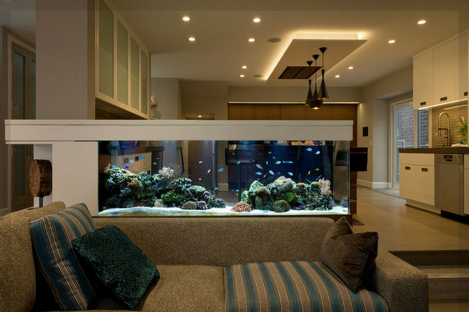 Setup your fishtank - visit our step by step guide!