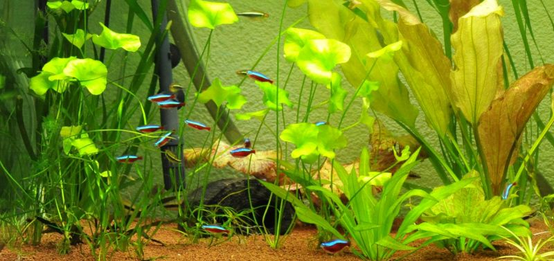 Stocking ideas for community fishtanks