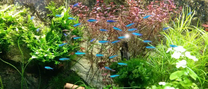 Pomysły na akwarium: południowoamerykańskie akwaria