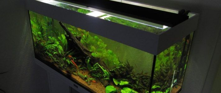 LED lighting in the aquarium: switching to LED is this easy!