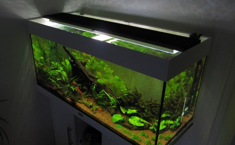 LED aquarium lighting creates vibrant colours
