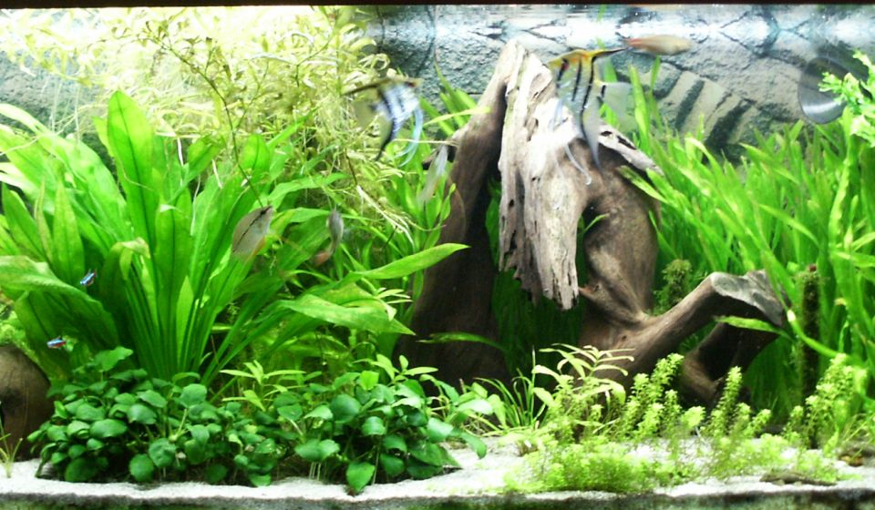 stocking ideas 90 120 gallons fishtank aquarium fish plants com
