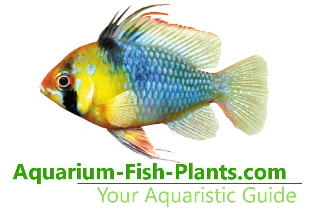 Aquarium-Fish-Plants.com