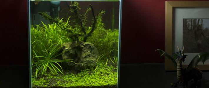 Nano fish tank stocking ideas – What fish for nano tanks?