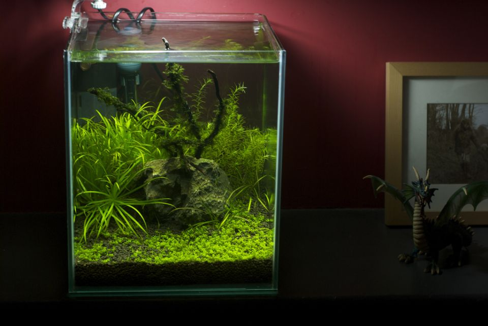 Nano Aquarium stocking ideas