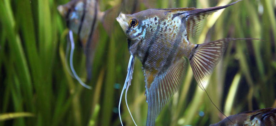 angelfisjh in the 120 gallons fishtank