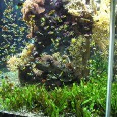 The stocking density in the aquarium