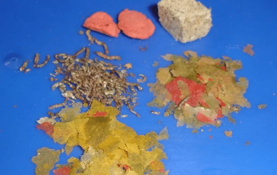 cibo per pesci gatto piumato